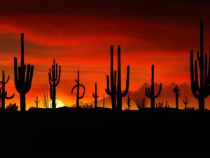 7636b__Sonoran-Desert-at-sunset